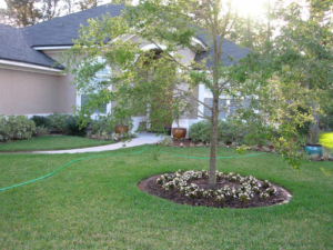 Landscaped property